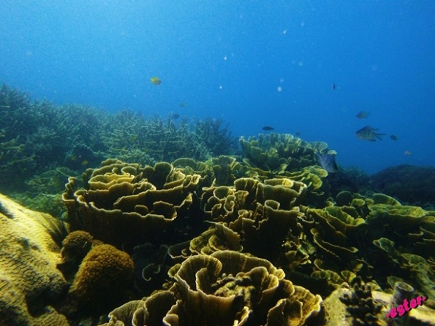 terumbu-terumbu karangnya..