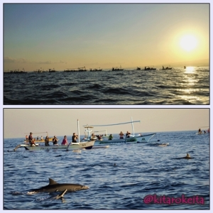 dolphin yang ucul-ucul..