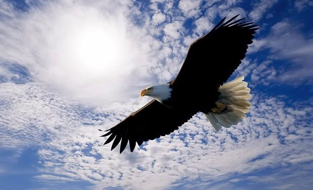 fly like an eagle