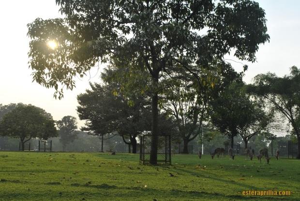 sisi lain dari Istana Bogor yang berbatasan langsung dengan KRB. Banyak rusaaaaaa..