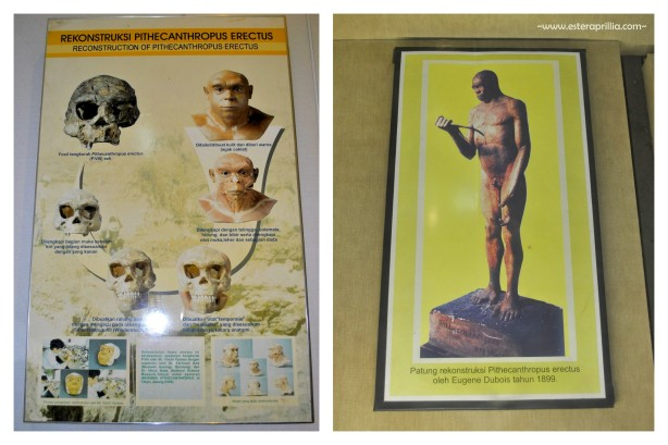 museum Geologi (2)