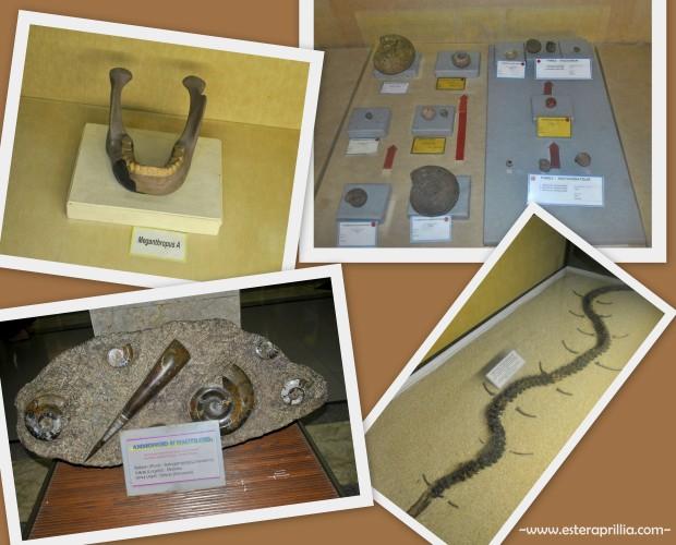 museum Geologi1 (2)