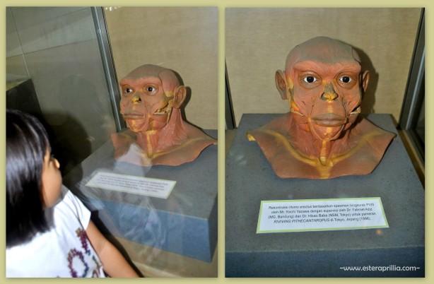 museum Geologi2