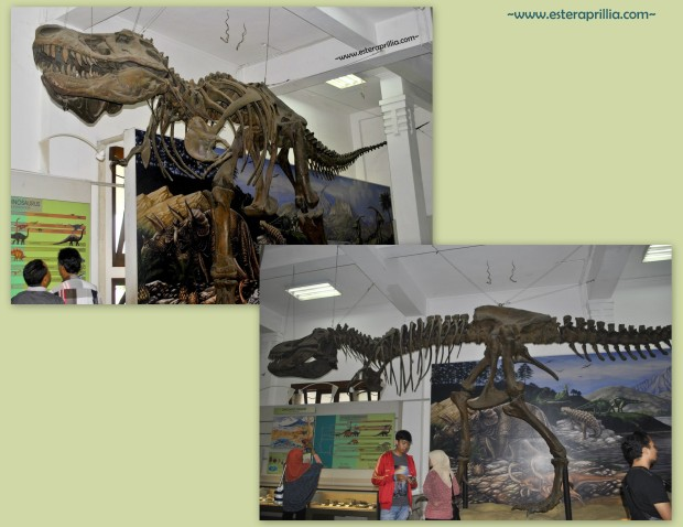 museum Geologi3