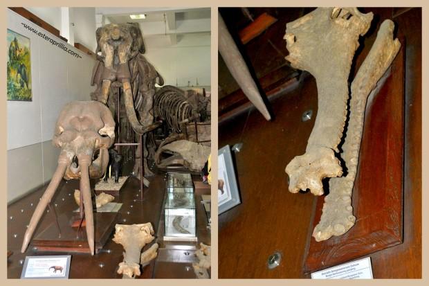 museum Geologi5